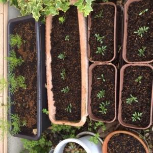 キュウリ、ミニトマト、枝豆、マリーゴールド