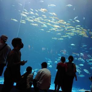 水族館は好きですか。魚を眺める時間での効果とは。