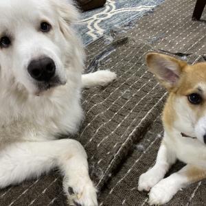 犬のおもちゃのおすすめは鹿の角!【大きな注意点もあり】