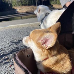 犬の散歩にオススメ【茨城県福ちゃんの森公園行ってみた!】