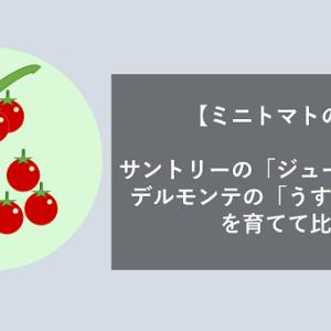【ミニトマトの苗】サントリーの「ジューシーミニ」とデルモンテの「うす肌トマト」を育てて比較