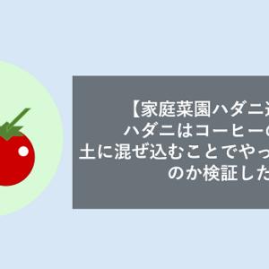 【家庭菜園ハダニ退治】ハダニはコーヒーの粉を土に混ぜ込むことでやっつけられるのか検証した