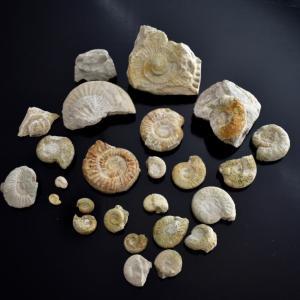 フランケン地方グレーフェンベルクでジュラ紀の化石を探す