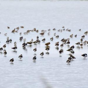 野鳥の宝庫、UNESCO世界遺産ワッデン海