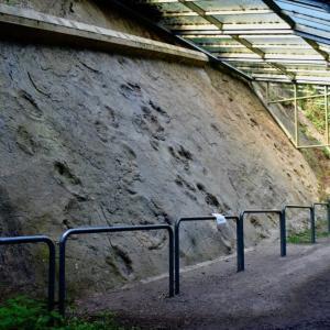 UNESCOグローバルジオパーク TERRA.vita特集 2 バークハウゼンの恐竜の足跡