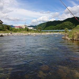長良川郡上で鮎の友釣り