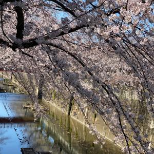 桜の季節と春季講習