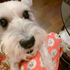 たった1日の外泊!愛犬ケロっとママは寂しさ100倍でした