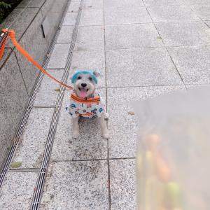 なんだか幼稚園児に見える愛犬♪新しいお散歩ウエア