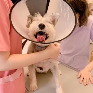 まるでこの世の果のような感情の愛犬!アイル病院DAYでした