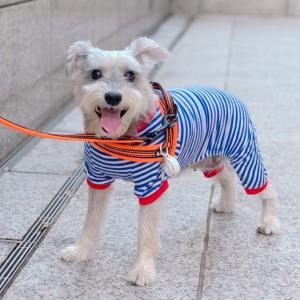 すっかり秋めいてきたお散歩♪楽しすぎてウキウキが止まらない犬