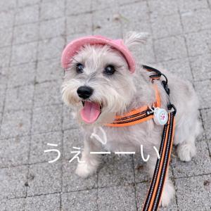 散歩後に素直にトリマーさんに身を任せる愛犬のなぜ?