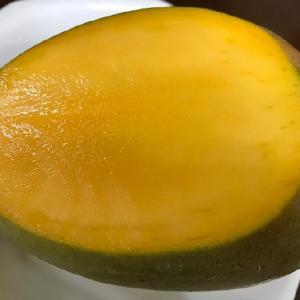 今が旬の「キーツマンゴー」を味わう!