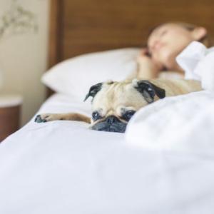 【朝活の始め方】早起きするために、1分でも早く寝よう。