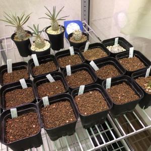 サボテン達の冬支度《我が家に念願の温室がやってきました》