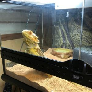 【爬虫類】成長に必要な紫外線とは