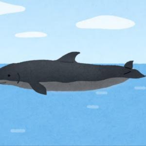 久し振りに鯨の肉