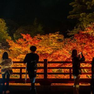 新潟県弥彦村 弥彦公園もみじ谷 紅葉ライトアップスナップ / Autumn leaves snapshot  at yahiko niigata / photolog vol.19