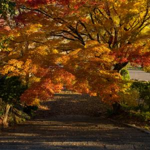 新潟県五泉市 村松公園 紅葉スナップ / Autumn leaves snapshot in muramatsu park / photolog vol.21