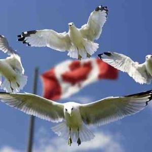 中国共産党がカナダを脅迫 香港在住のカナダ人の安全は保証できない