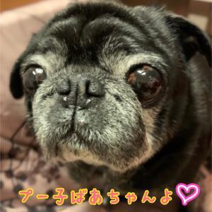 15歳 セラピー犬プー子の日記
