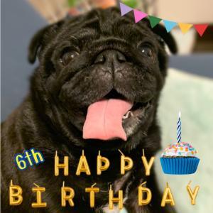 看板犬ダンの誕生日