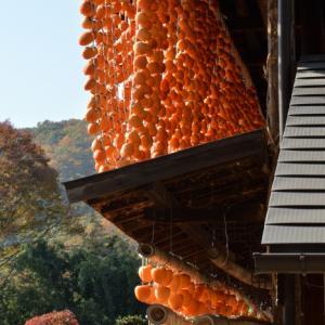 塩山枯露柿の撮影 2