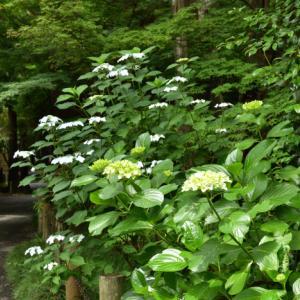 梅雨入り前の平林寺