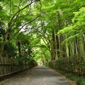 梅雨入り前の平林寺 2