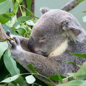 【オーストラリアワーホリ】このままオーストラリアに残るか?帰国するか?