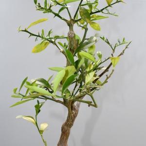 キンズ 種木の解体