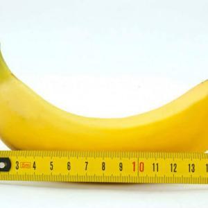 【国際基準】ペニスの正確な測定方法