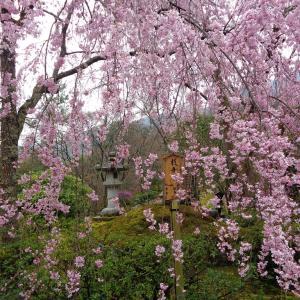 桜2020 その2(嵐山へ)