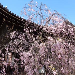 桜2020 その3(立本寺)
