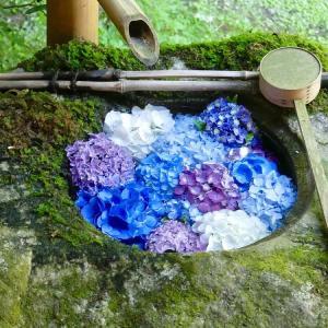 京都の梅雨を楽しむ~柳谷観音のアジサイと花手水~