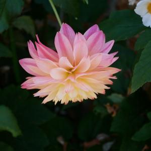 四季を通じて訪れたい、季節の花が咲く京都の植物園3選