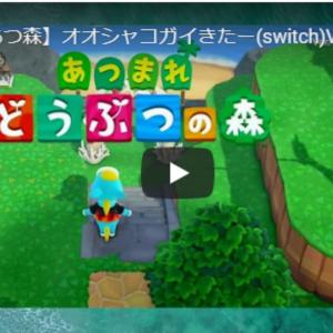 78【あつ森】オオシャコガイきたー(switch)Vlog