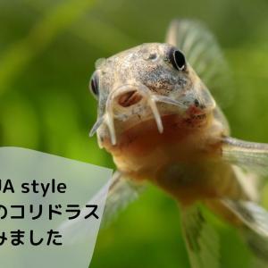『AQUA style vol.16 みんなのコリドラス』読みました。魅力たっぷりの内容に迫る!