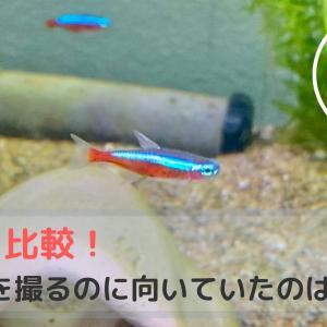 カメラ比較!熱帯魚を撮るのに向いていたのは・・?