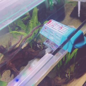 コリドラスに赤虫をあげてみたよ!今までにあげた餌と反応のまとめ