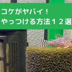 コケがヤバイ!緑藻をやっつける方法12選