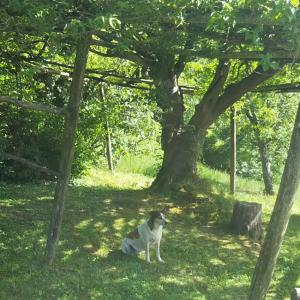 大きなCrognolo 【くろんにょろ】の木を観察した話&自然保護区ハイキング
