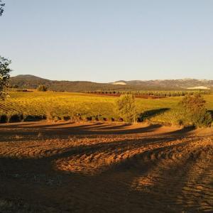 オリーブ収穫や帰国へ向けて最近の思い