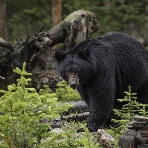 日本に生息する大きい哺乳類TOP10