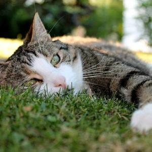 ガチで涼しい猫用(ペット用)クールベッドの作り方