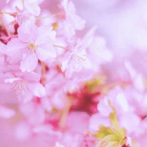 【ukka=桜エビ~ず】全員が美少女!ukkaのメンバープロフィール