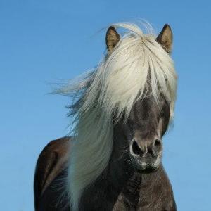 2020年は「アユツリオヤジ」!?思わず耳を疑う面白い名前の歴代競走馬を画像付きで紹介!