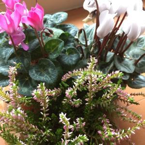 floweringセラピー®セッションのご説明です