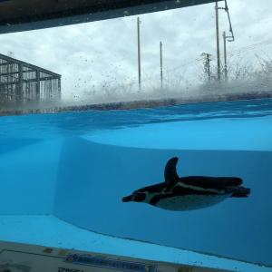 (兵庫県)神戸市立王子動物園 動物科学資料館