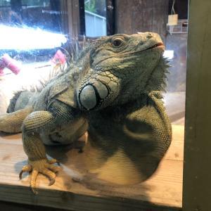 (兵庫県)神戸市立王子動物園 太陽の動物舎